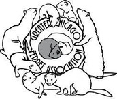 We are the Greater Chicago Ferret Association