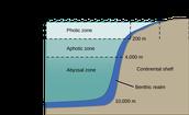 Biotic Factors of Inshore Marine habitats