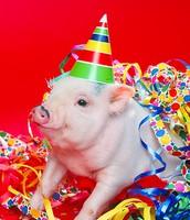 Pappa Pig as a piglet