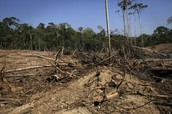 Global Issues: Deforestation of the Rainforest