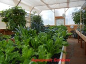 The Inside Track On Speedy Systems For Aquaponic Gardens