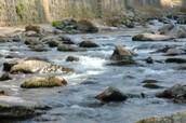Freshwater (& other) invertebrate metabarcoding