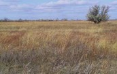 The Tall Grass!!!