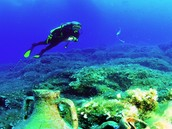 a scuba diver on a reef