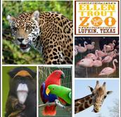 Ellen Trout Zoo