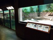 Reptiles Exhibit