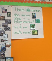 Español: Plant as Marinas (Marine plants)