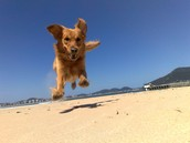 Perro corriendo.