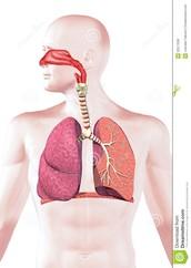 Órgãos e funções