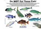 Fish not to Eat