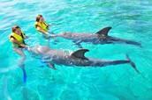 Encuentro con los Delfines; Roatan