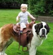 Riding a dog