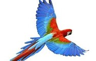 Simile: I absorb her like a bird in a aviary, He watches her but does not interact with her page 16