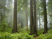 Redwood National Park features