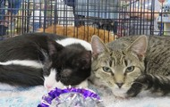 Adopt Nayla & Cayla!