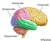 Seminar One-Bio-Chemical/Neural Major Assignment