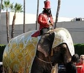 T-Pain Riding Elephant!!