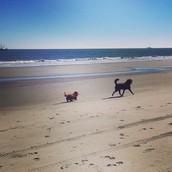 Gus and Bane at the beach