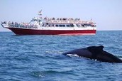 whale watching charters are very popular in tropical regions of the earth.