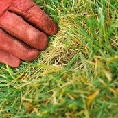 Lawn related diseases