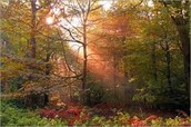 Where are the deciduous forests ?