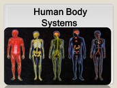 Types of the body systems: