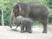 Mommy Elephant and her baby