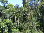 How do the thick rain forests effect people?