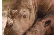 Rhinos!