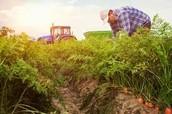 ~Farming~