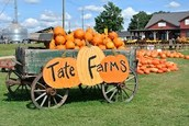 Pumpkin Farm Field Trip