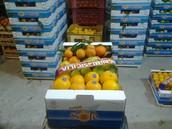 Azienda Agricola Minore Salvatore sede:Palagonia 95046,via loreto,13.  Pi 01364570877 contatto oranblu@live.it cellulare 3933042928