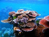Coral Reefs are in danger!