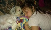 Abby & Bella sleeping