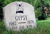 Lost a Loved Pet?