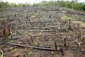 Deforestation and the 'Slash and Burn' Technique
