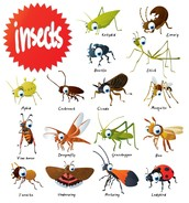 insects- Phylum Arthropoda