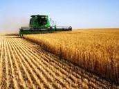 Farming/agriculture