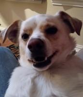 My dog Chi Chi
