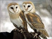 How Do the Owls Relate to This?