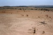 Land HEI: Monoculture