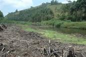 How do we Cost Wetlands?