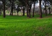 Mi bosque mágico