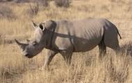 Rhinos and Elephants