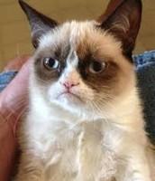 Grumpy Cat in Little Compton