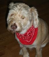 My dog Larry