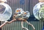 Bird #10
