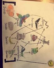 My food web