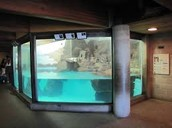 ^Aquatic Animal Exhibit