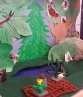 2nd Grade Habitat Diorama